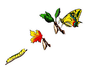 stmbutterfly